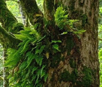 Tumbuhan Paku dengan pohon Jati